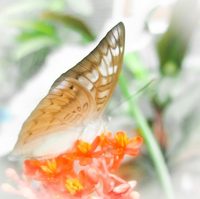 Foto makro sayap kupu-kupu