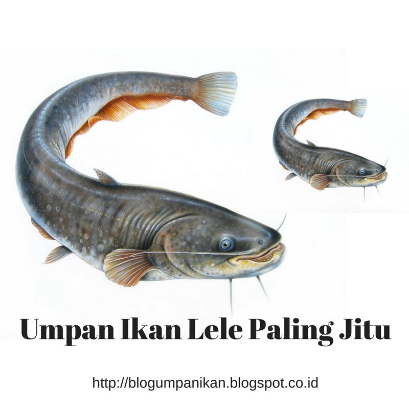 Umpan Mancing Ikan Umpan Ikan Lele