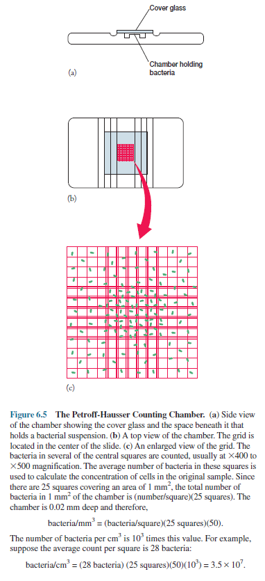 Petroff-Hausser Counting Chamber