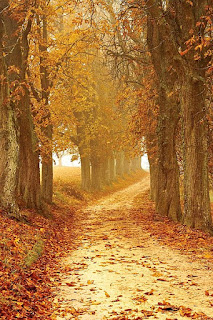 https://commons.wikimedia.org/wiki/File:Autumn-autumn-colours-brown-countryside-358238.jpg