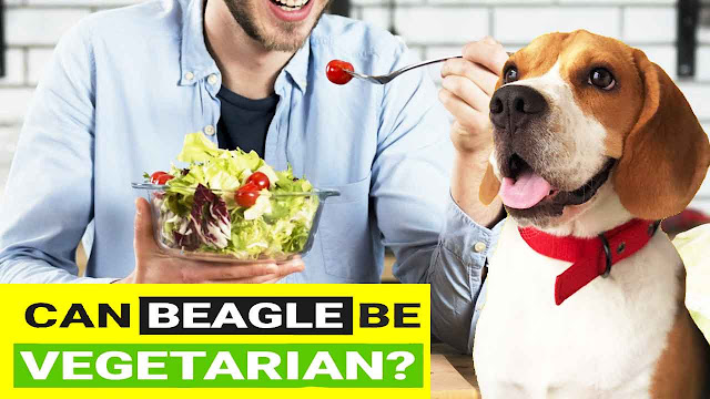 Can Beagles be Vegetarian?