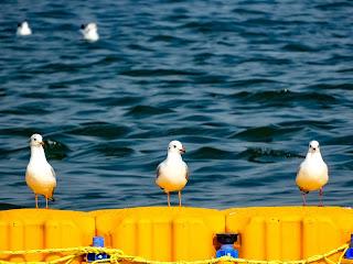 Bird Photography, Kumbh 2019 , Siberian birds in Allahabad