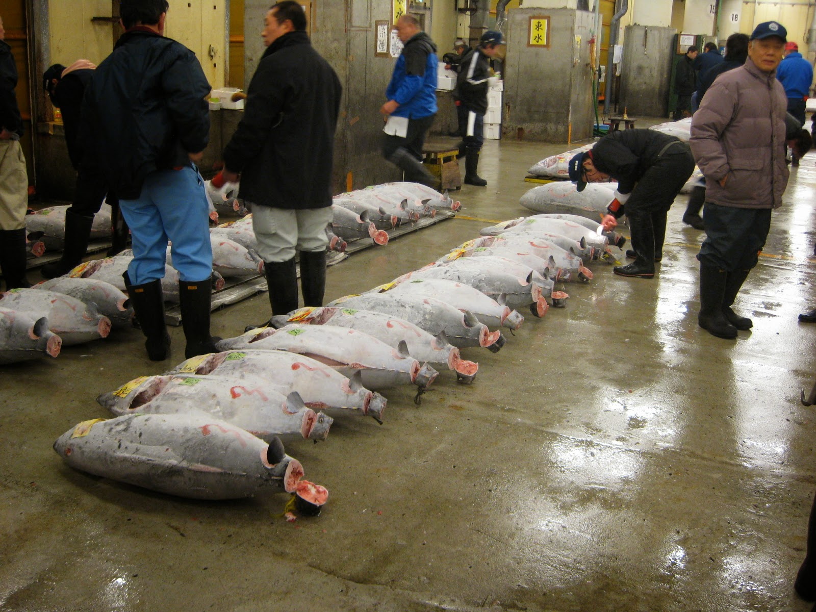 Tokyo - We quietly observe licensed buyers inspecting tuna