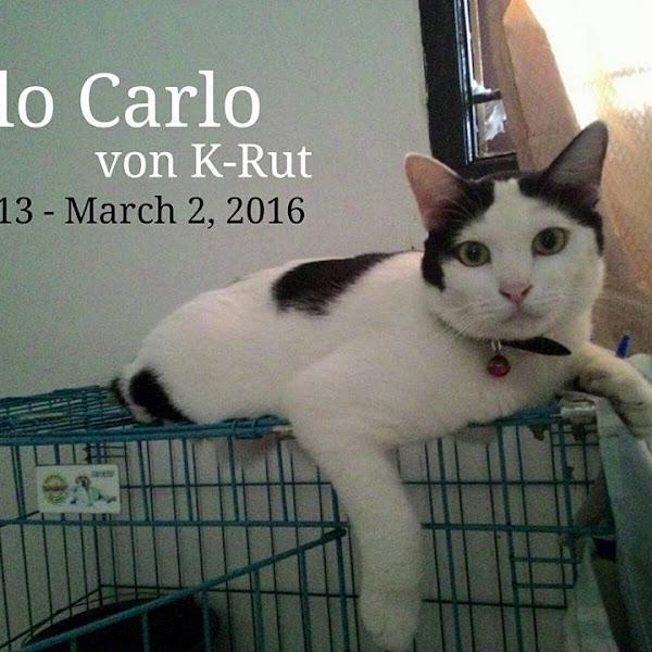 Selamat Jalan, Jilo.. Kucing Dengan Kisah Unik