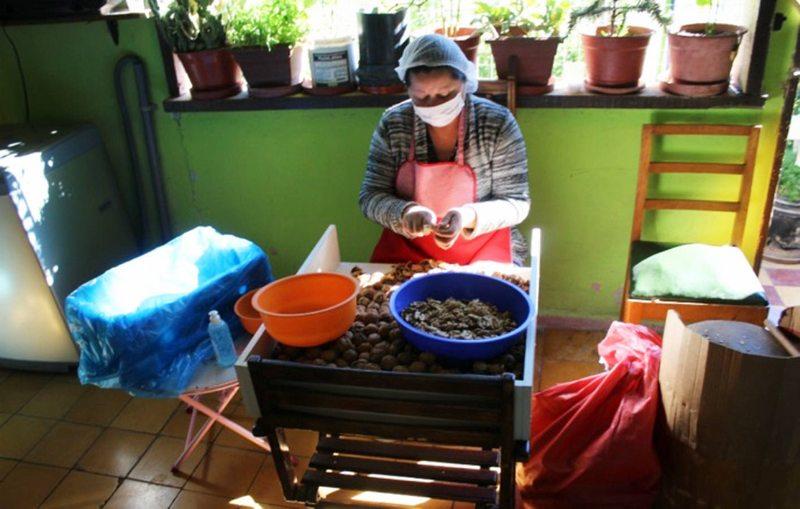 Cáscaras de camarones y nueces dan vida a productos novedosos