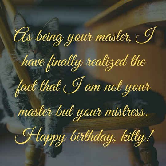 New Birthday Wishes for Cats