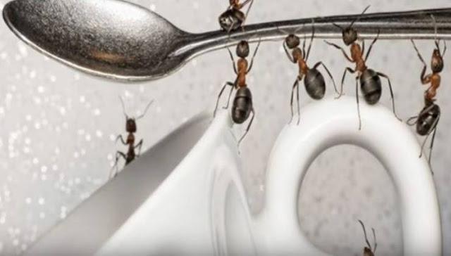 فيديو| تخلصوا من النمل نهائيا بطرق طبيعية.. ولن تعود إلى المنزل مرة أخرى !! تجنبوا أضرار المبيدات الحشرية وجربوا هذه الطريقة!