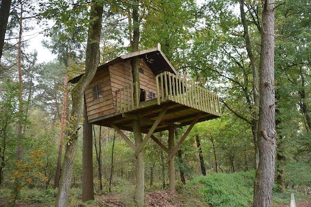 casa-albero-casa sull'albero-bosco