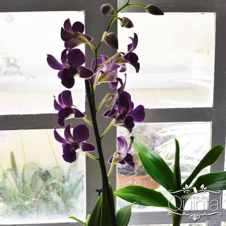 Orquídeas roxas, a cor da espiritualidade. Para lembrar e ser grata por todas as bênçãos.