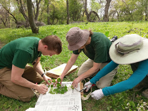 Mengenal Botanis, Pekerjaan yang Mempelajari Tumbuh-tumbuhan