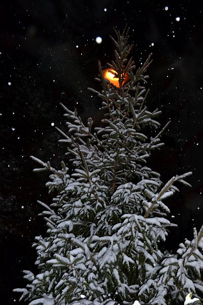 Fir tree and snowflakes in the night