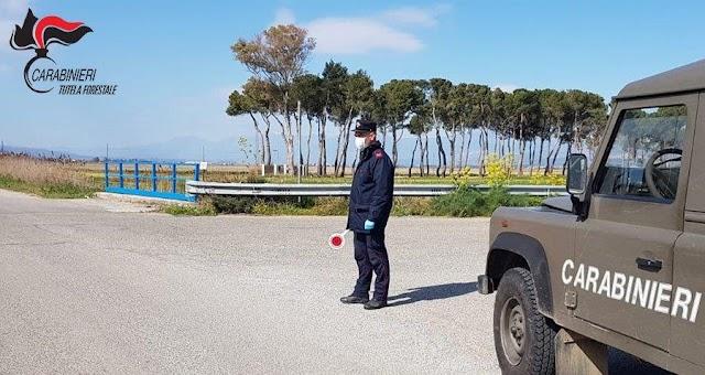 COVID-19. Denunce e sanzioni dei Carabinieri Forestale