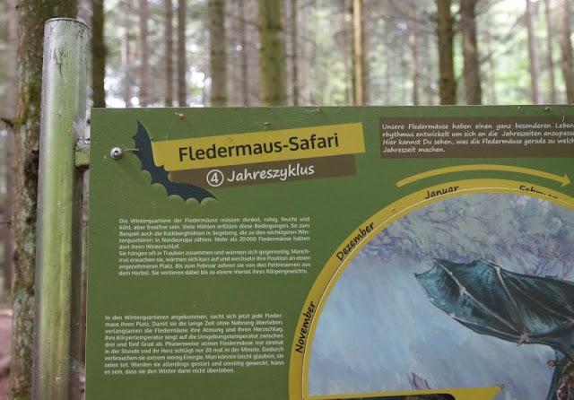 Fünf weitere Ausflugsideen im Schwentinental. Die Fledermaus-Safari ist etwas für ältere Kinder.