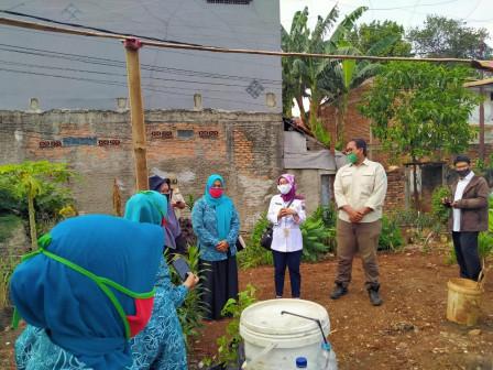 Warga Jakarta Timur Manfaatkan Lahan Tidur untuk Urban Farming