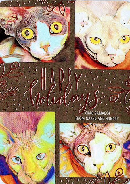 Happy Holidays, 2018 card with 4 sphynx cats