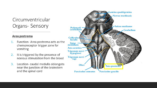 What are Circumventricular Organs?