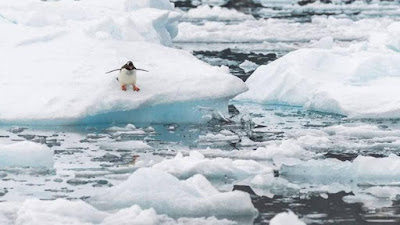 Gelo-na-Antartida