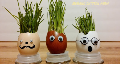 grasses and seeds growing in eggshells