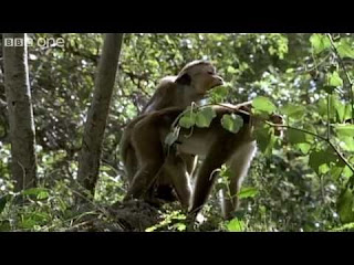 planets funniest animals youtube - photo #40