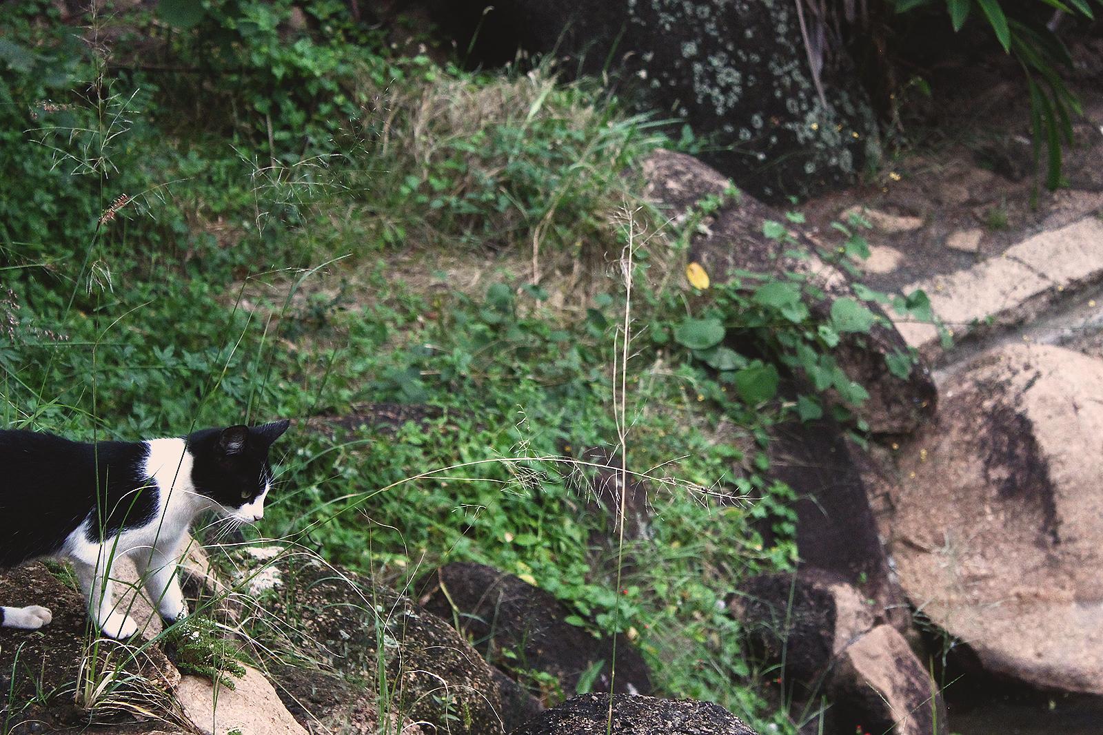gato preto e branco observando paisagem