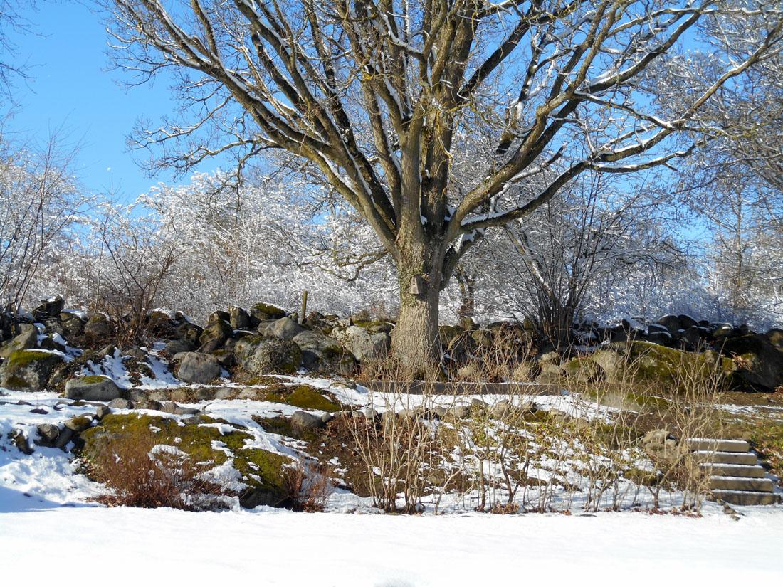 Il giardino con la neve, oggi 24 febbraio 2017