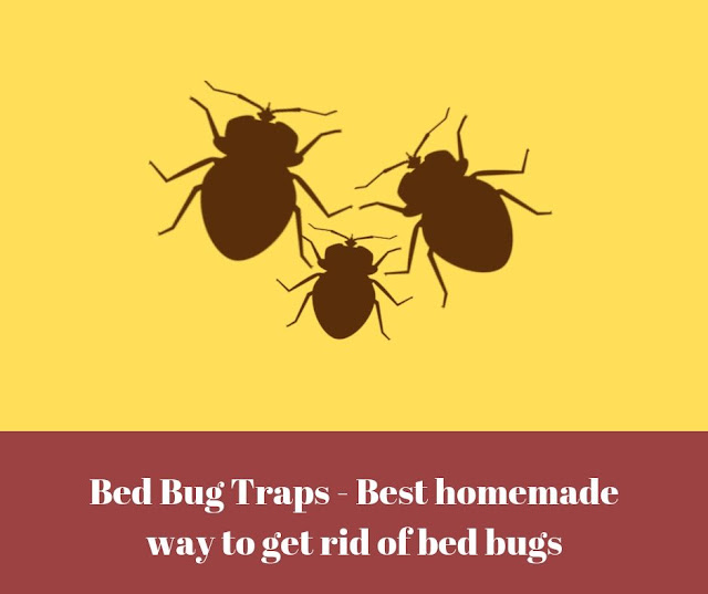 Best Bed Bug Traps