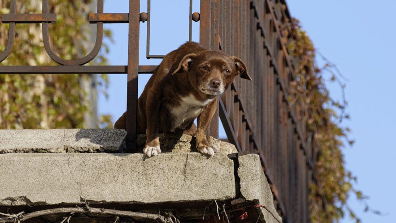 Επιτρέπεται να ζει ο σκύλος μόνιμα στο μπαλκόνι ή την ταράτσα;