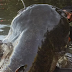 Incredible - Watch live video fishing with 52 kg weight