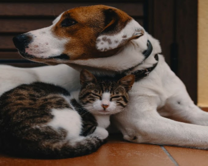Introducing your dog to a cat