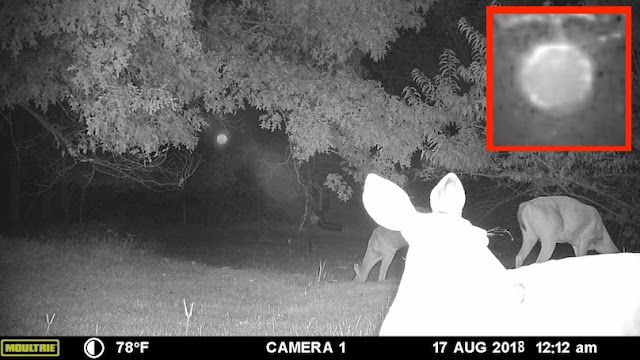 Orb Caught On Animal Forest Cam Observing Deer Cloak%252C%2B%25D0%259D%25D0%259B%25D0%259E%252C%2BGalaxy%252C%2B%25D8%25AC%25D8%25B3%25D9%2585%2B%25D8%25BA%25D8%25A7%25D9%2585%25D8%25B6%252C%2BUFO%252C%2BUFOs%252C%2Bsighting%252C%2Bwar%252C%2Bsightings%252C%2BCarina%252C%2BNebula%252C%2BStar%2BTrek%252C%2BStargate%252C%2Btop%2Bsecret%252C%2BET%252C%2Batlantis%252C%2BW56%252C%2BSteve%252C%2BGod%252C%2Borb%252C%2Binfrared6
