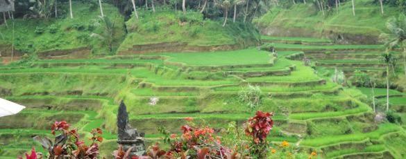 Teras Sawah Bali - Bali, Sawah Teras, Liburan, Perjalanan, Objek Wisata
