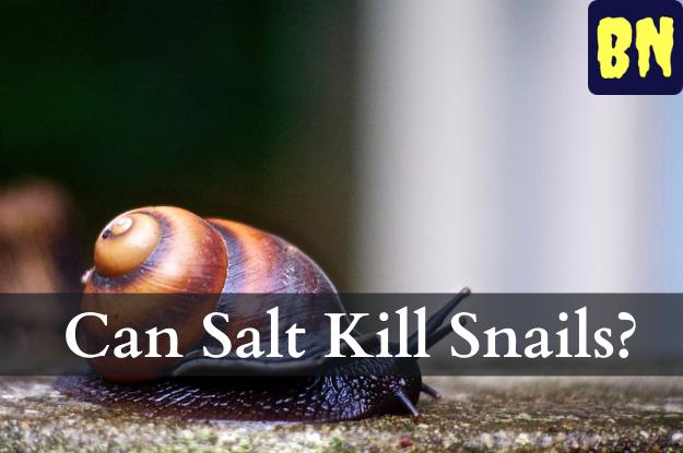 Can Salt Kill Snails?