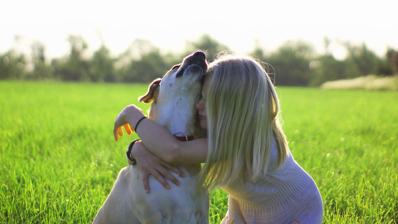 Dog DNA Test Can Tell You About Your Best Friend