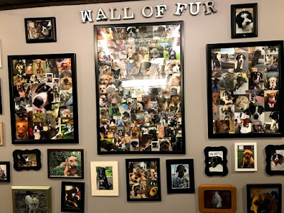 Wall of Fur at Lakeville Brewing Company. Lots of pictures of animals