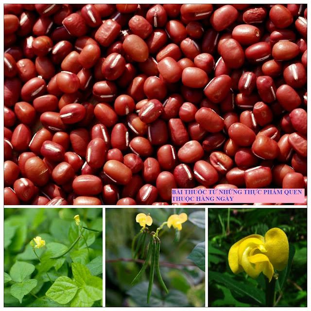Món ăn bài thuốc chữa bệnh đái tháo đacường, phù thủng, trĩ ra máu, tiểu ra máu từ hạt đậu đỏ hạt nhỏ