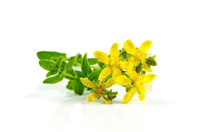 فوائد نبتة سانت جون وكيفية استخدامها