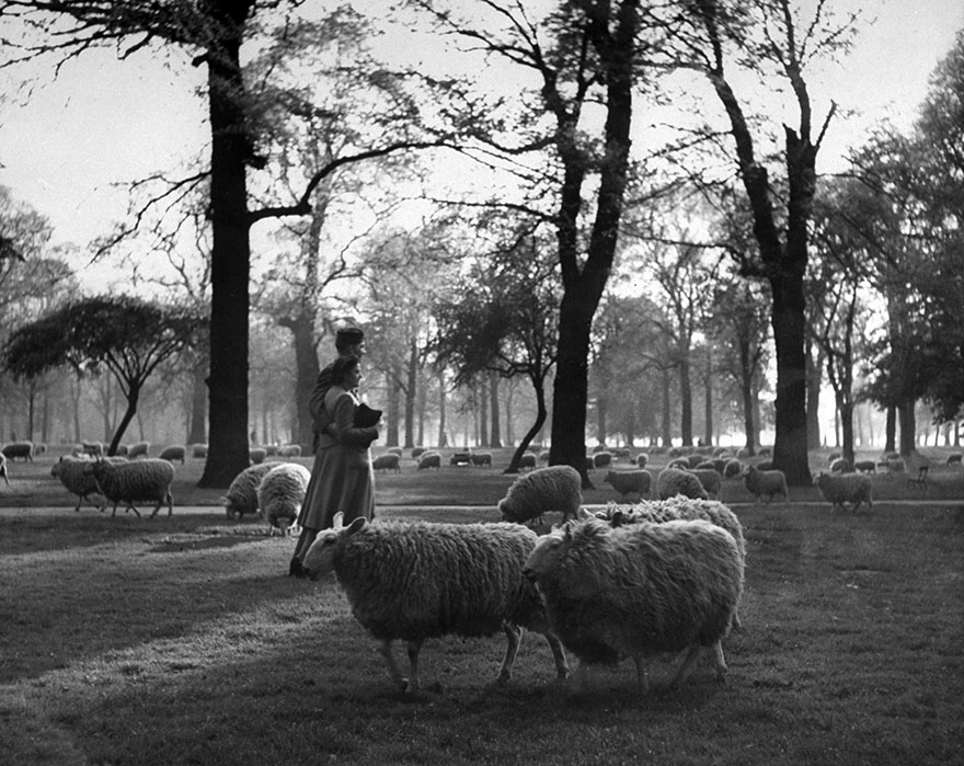 60 + 1 Heart-Warming Historical Pictures That Illustrate Love During War - A GI And His Girl Walk Arm-In-Arm Among The Sheep In Kensington Gardens, London, 1945