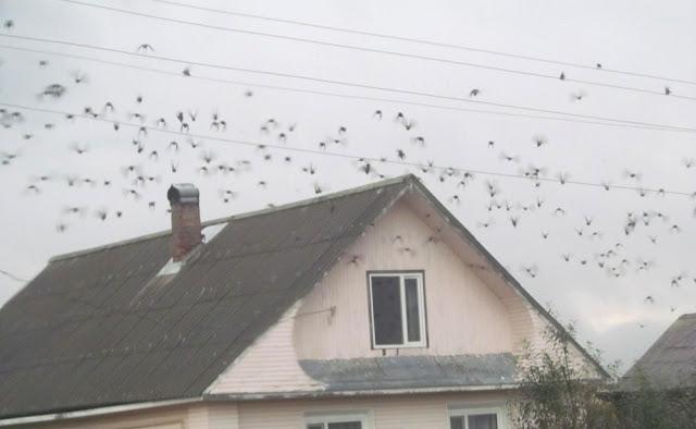 птицы взлетели