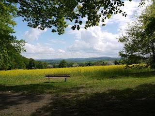 Blick vom Waldrand oberhalb des Rimmelsbacher Hofs Richtung Moosalbtal