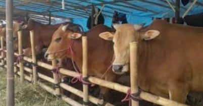 Pemkot Bekasi: Antisipasi penyebaran virus COVID-19, periksa pedagang dan hewan datang