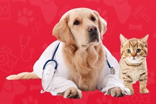 Apa Sih Produk Vitamin Yang Tepat Untuk Menjaga Bulu Anjing Tetap Indah?