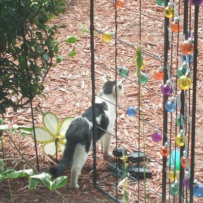 Mystic Elsie in My Front Yard Garden in Leesburg, Florida