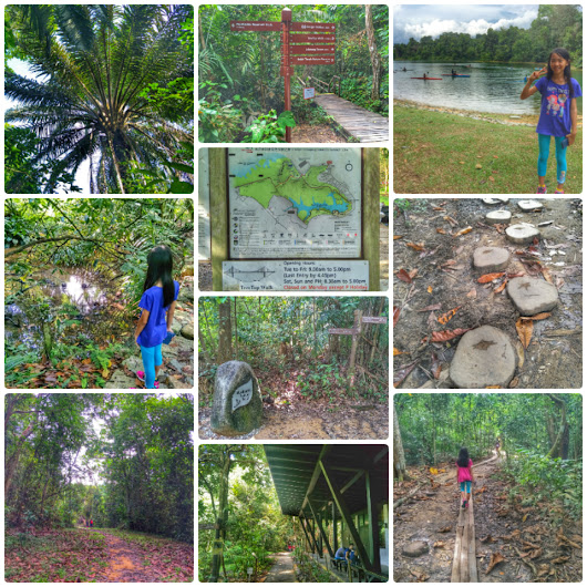 Tips for Hiking at MacRitchie Natural Trail