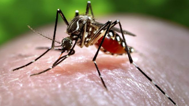 كعالم آخر مستقلٍ بذاته تحت الميكروسكوب 87953765_c0093043-feeding_mosquito-spl.jpg