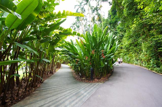 Botanic gardens-Singapore