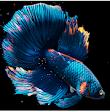 Betta Fish Live Wallpaper FREE - Papel de Parede 3D