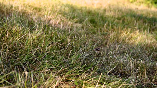 Kolmevuotiaan lapsen järjestelmäkameralla ottama valokuva - Photo taken with SLR-camera by a 3-year-old child
