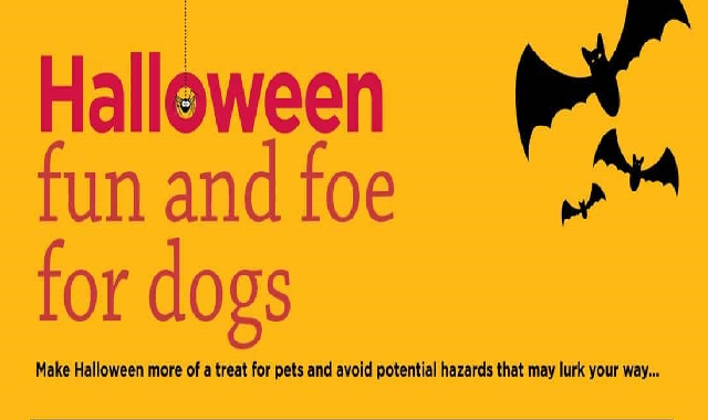 Halloween Fun And Foe For Dogs #infographic