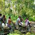 Anggota Koramil 06/Kampung Dalam Melaksanakan Gotong Royong Bersama Masyarakat Nagari