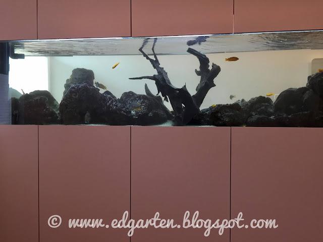 Aquarium beim Arzt